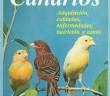 cria-canarios